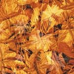 Amber Fall Leaves From Timeless Treasures by Judy & Judel Niemeyer Wildflowers Collection